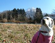 富士山とナンシー
